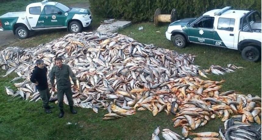 Matanzas de peces en el río: un desastre que va más allá de la bajante